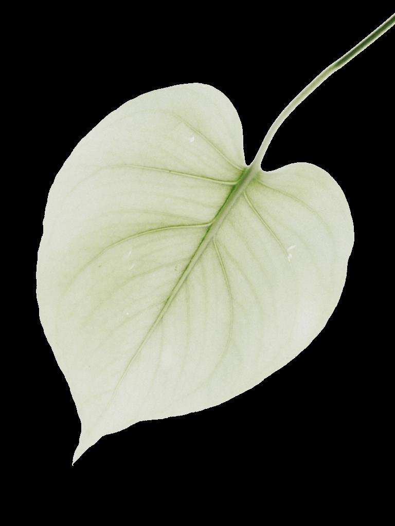 Immagine Foglia Verde